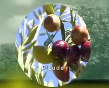 Variedad Picuda