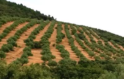 aceite de oliva virgen extra de jaen