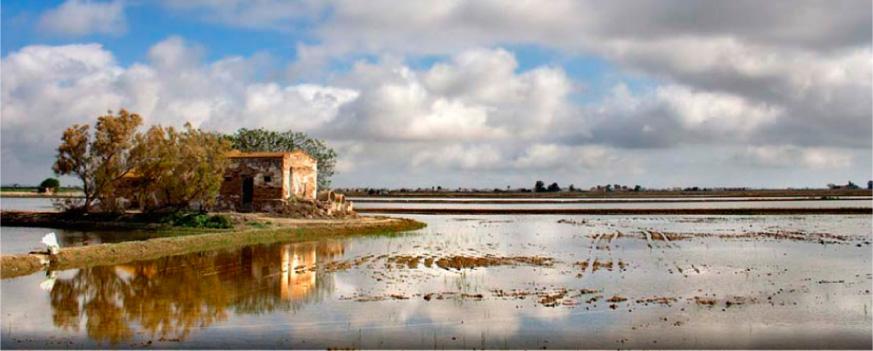 història de l'arròs montsià del delta de l'ebre