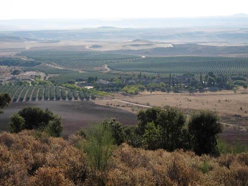zona de cultivo de olivos, elaboración aceite de oliva virgen extra